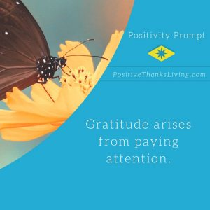gratitude arises from paying attention - live a life filled with thankfulness by noticing all the tiny things
