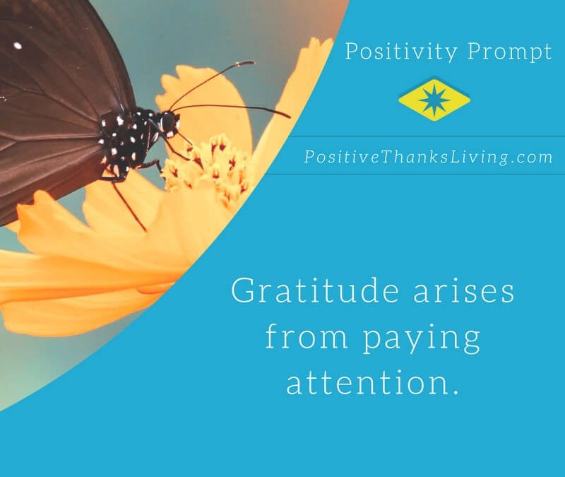 Gratitude Arises from Paying Attention