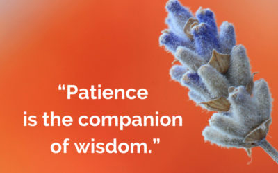 Growing in Wisdom and Patience